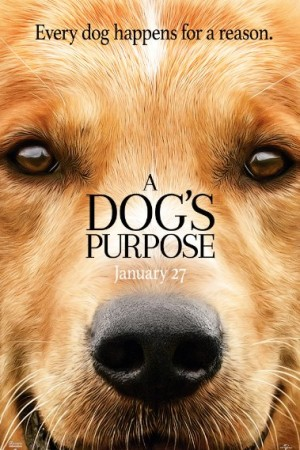 Rent A Dog's Purpose Online